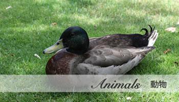 写真素材:動物