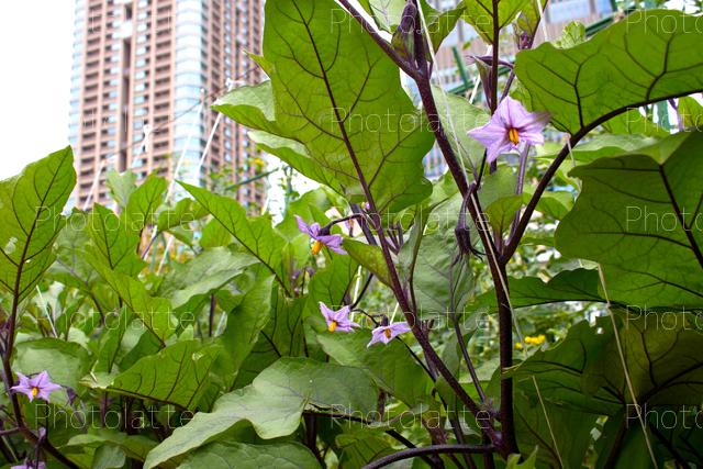 都会の菜園