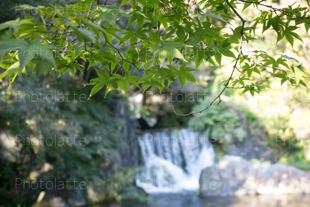 青紅葉と滝