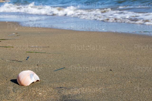 波打ち際の貝殻